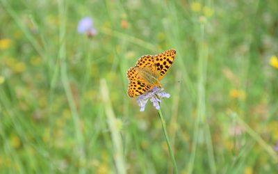 """""""Vratimo livade leptirima!"""" – pridružite se volonterskom kampu za obnovu travnjaka u Parku prirode Učka"""