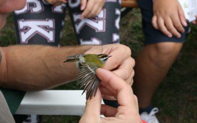 Prstenovanje ptica u Parku prirode Učka – 11. Ornitološki kamp Rovozna