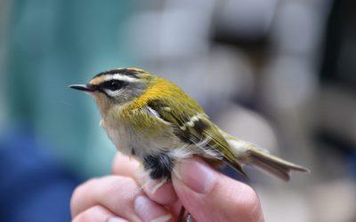 """Najava: Otvoreni dan """"Ornitološkog kampa Učka 2021."""""""